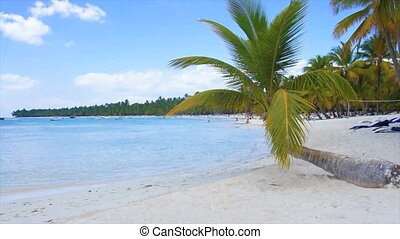 caribbean dream - caribbean paradise beach with palm tree