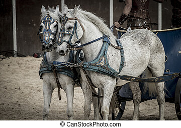 Beautiful horses, Roman chariot in a fight of gladiators,...