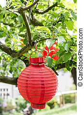 Red lantern on a tree branch.