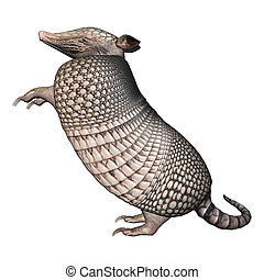 Armadillo - 3D digital render of a Armadillos, a New World...