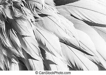 Bird Feather Abstract Background