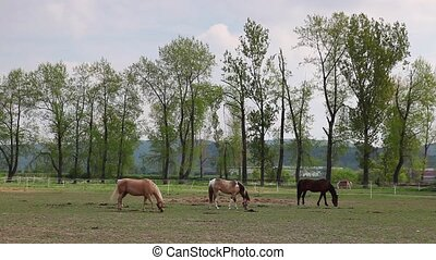 Beautiful horses on the ranch