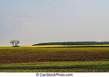 Fields in morning light