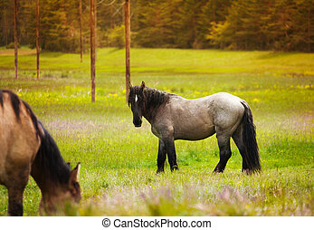 Two beautiful horses near forest