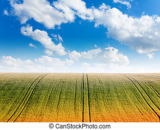 Wavy field with cloudy sky and horizon - Beautiful wavy...