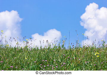 Grass and cloudy sky - Spring nature background with grass...