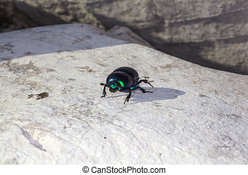 Green beatle - View of green beatle on the rock