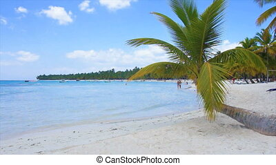 caribbean beach - natural caribbean beach