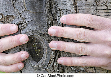 Environmentalist - Nature lover\'s hands around a tree...