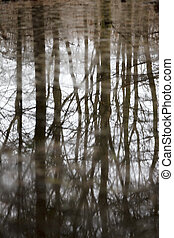 Reflextion - Trees refected in small lake