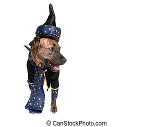 wizard dog - one happy wizard dog clothed over white