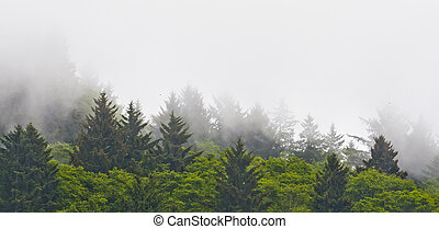Fog Hangs Low on Mountains