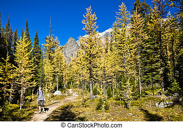 Hiker in the Autumn Landscape of Banff, Canada