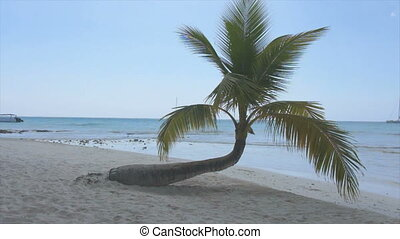 palm tree - little palm tree on caribbean island