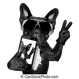 selfie dog - french bulldog taking a selfie with cool fancy...