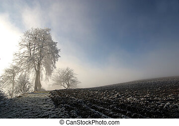 Beautiful Winter  - Winter scenery with frost covered tree