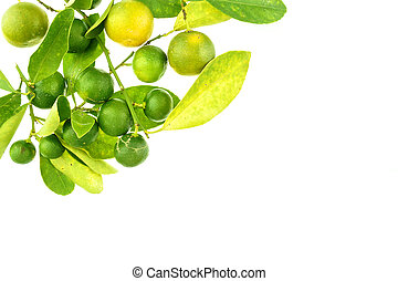 Group of green calamondin and leaf isolated - Group of green...