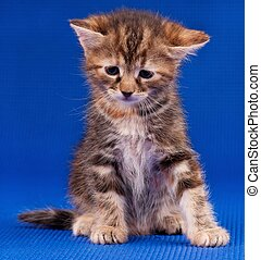 Sad kitten - Sad little kitten sits, having hung the head on...