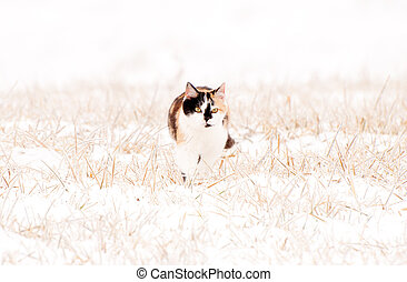 A calico cat in snow and ice.