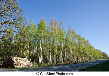 Logpile at roadside - Logpile of birch tree at roadside in...