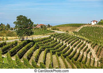 Green vineyards on the hills of Piedmont, Italy. - Tree on...