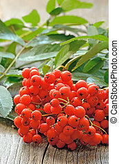 Rowanberry on table - Rowanberry on the wooden table