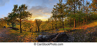 Forest with sun - panorama