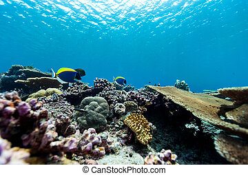 Coral reef underwater - Beautiful colorful coral reef and...