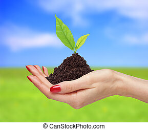 woman's hands are holding green plant over bright nature background