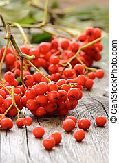 Red rowanberry on a wooden table