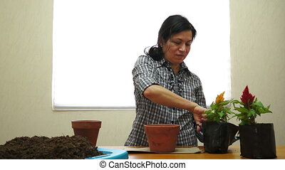 Female Gardener Planting - Eye level shot of a female...