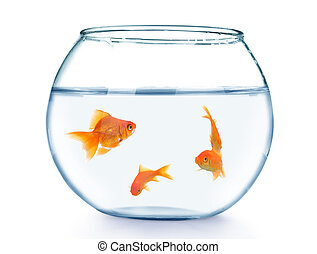 Golden fish in fish bowl.