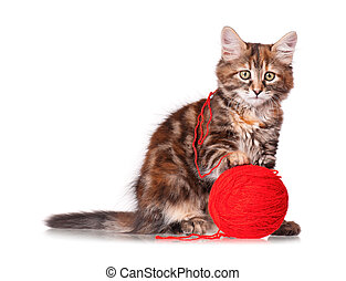 Kitten with red clew of thread