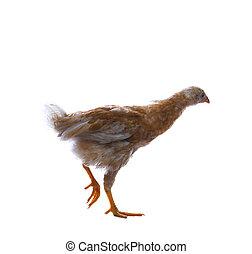Photo de stock de dcoratif, coq - tte, cock-poultry