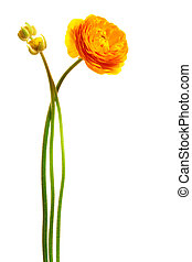 yellow flower - Beautiful yellow flower on a white...