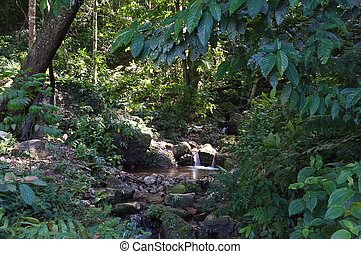 Jungle scence - The upstream start of a mighty river in the...