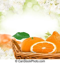 Tangerine - Photo of tangerine in basket with blossom...
