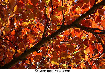 Canopy of Red Leaves in Summer