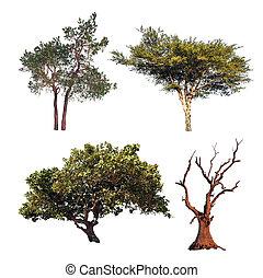 不同, 彙整, 樹, 被隔离, 樹, 四, 白色