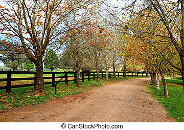 Tree lined dirt road in Autumn - An avenue of deciduous...
