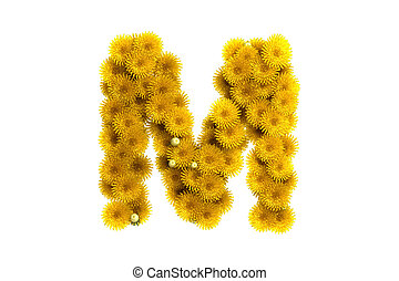 Yellow dandelion letter M, isolated on white - Yellow...
