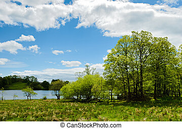 Trees by the edge of Loughrigg Tarn - View of trees by the...