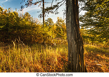 Autumn Forest Scene With Colorful Leaves, Tree and Blue Sky