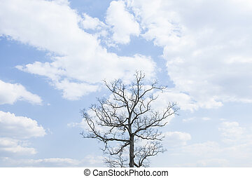 Single tree on a hill with blue sky background