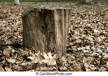 stump - the old stump in the middle of the fallen dried...