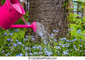 planta, cuidado, Regar, primavera, flores, jardín