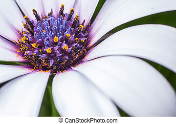 Flower background - white and purple flower on green...