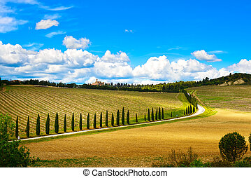Vineyard, cypress Trees rows and road in a rural landscape in val d Orcia land near Siena, Tuscany, Italy, Europe.