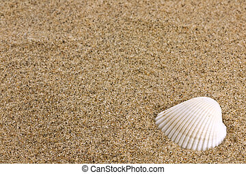 sand and sea shell - Close up of beach sand and sea shell