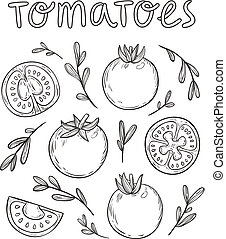 Sketched tomatoes hand drawn collection, vector illustration